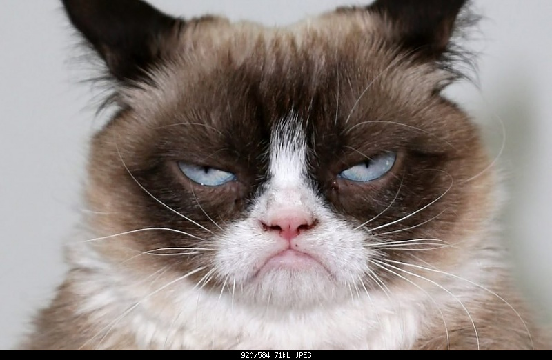 Click image for larger version.  Name:Grumpy-Cat-920x584.jpeg Views:35 Size:70.9 KB ID:367807